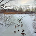 A Bronx View – Getting my Ducks in Order by Eddie C3