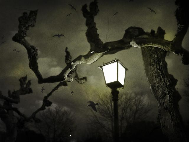 Noche viva