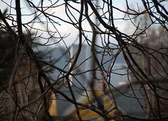 10. Through The Trees