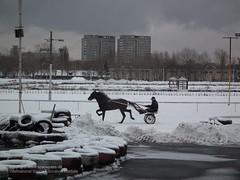 horse-hippodrom