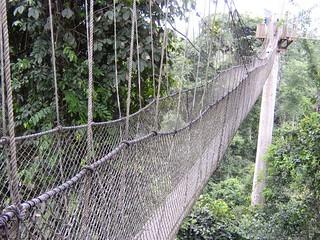 Canopy climbing at Kakum National Park (Ghana 2005)