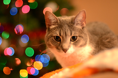 Christmas Roxy