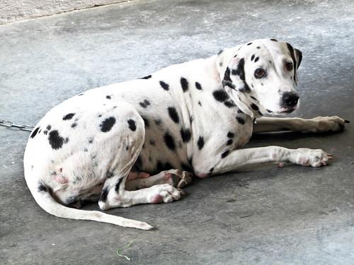 IMG_1348 Kinki the dog