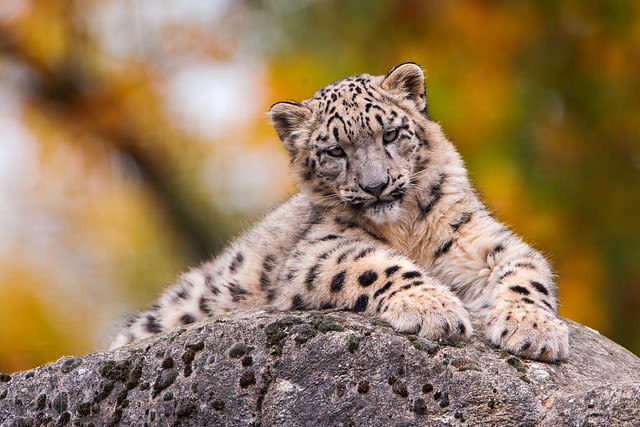 Cub posing on the rock
