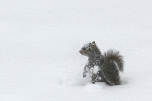 Snow Covered Squirrel