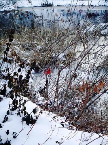 CardinalSm by redwingx