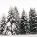 Winter by vilpertt