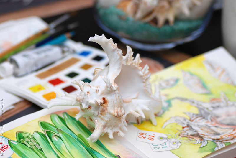 """Shells and my """"365"""" sketchbook"""