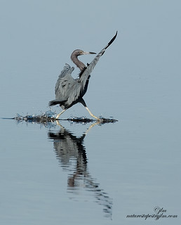 Walking-On-Water-little-blue