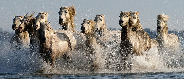 group of horses galloping on the beach