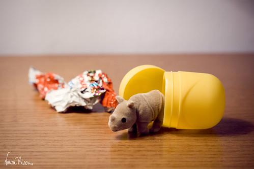 ¿Quién dijo que los rinocerontes no nacen de huevos?