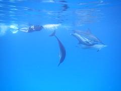 ハワイ島体験ダイビング