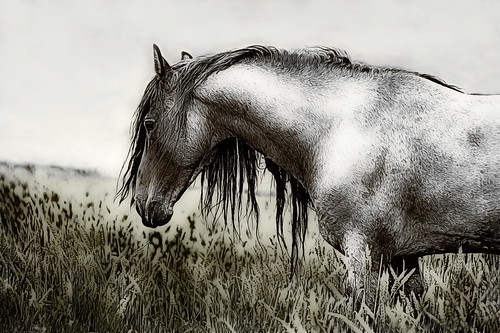 Valley Horse by L1Comics