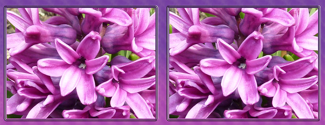 Pink'n'Purple - Cross-eye 1 3D