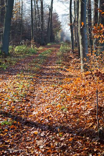 Ветреница осень,разбросала листья...CD7I7920 by andrey.salikov