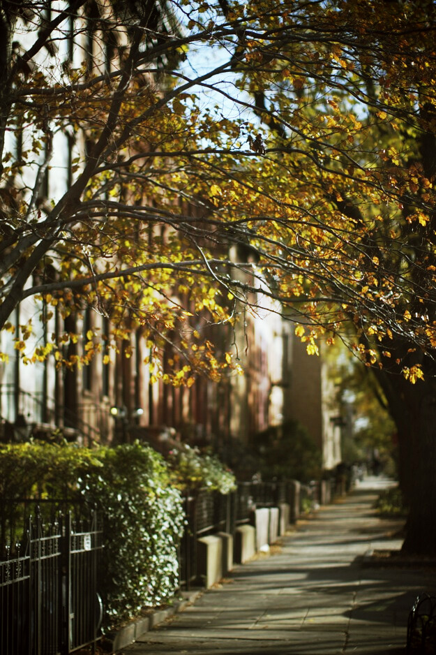 autumn_new_york_10.jpg_effected