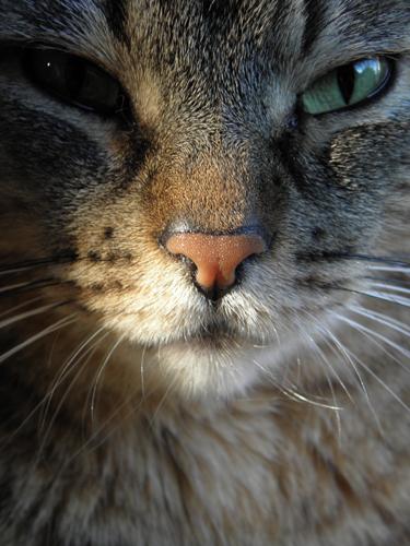 la gata más bonita del mundo