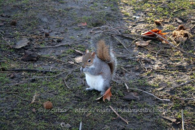 scoiattolo squirrel