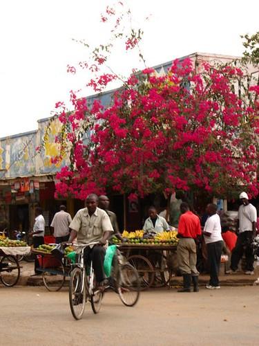 Tanzanian Market Africa by Danalynn C