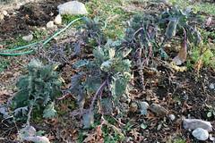 winter gardens 055