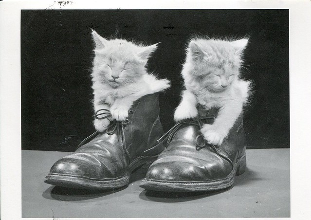 Kitten by Ewing Galloway (1991)