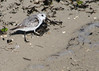 Bird Species #56