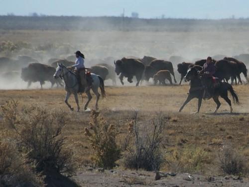 16-Zapata Ranch