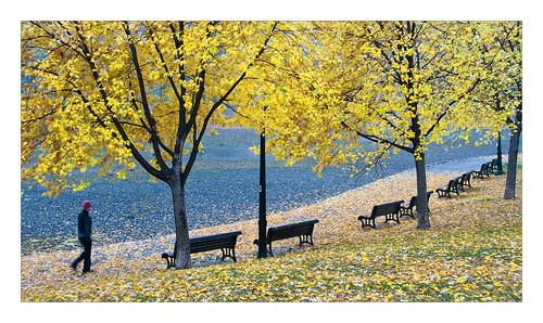 Parc LaFontaine à l'automne