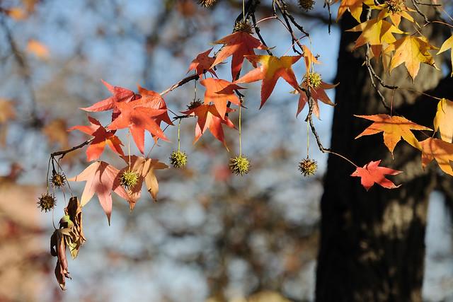 Last autumn days
