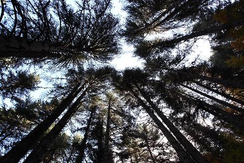 sky tree love canon eos kiss cielo 5d emotions albero canoneos calabria 1740mm sila emozioni canon1740mmf4 camigliatello 5dmarkii camigliatellosilano canon5dmarkii canoneositalia fiazappala