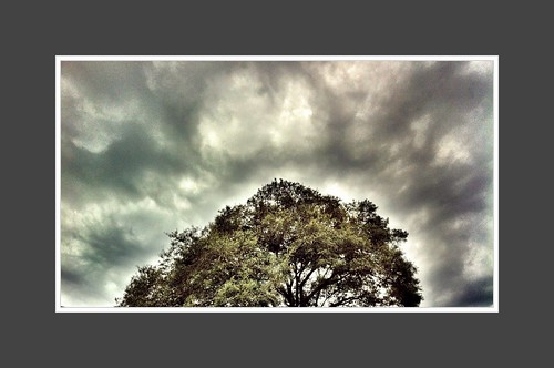 camera trees sky green apple leaves clouds photography grey big view florida overcast treetops photograph frame jacksonville fl jax oaktree tops cloudporn iphone 2011 iphone4 mosesedge