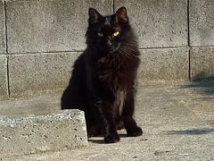 cat 065