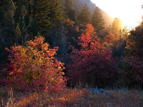 trees fall colors utah logan