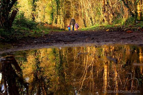 trees ireland reflection walking candid impromptu midlands 2011 lakepondpool gettyimagesirelandq12012