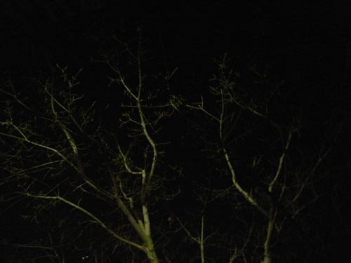 Trees at Night _ 9266