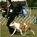 AKC Naples ~ November 21-2009  Armani hit the ring again after been out for a year and took Best of Opposite Sex
