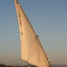 Felucca sailing in the Nile
