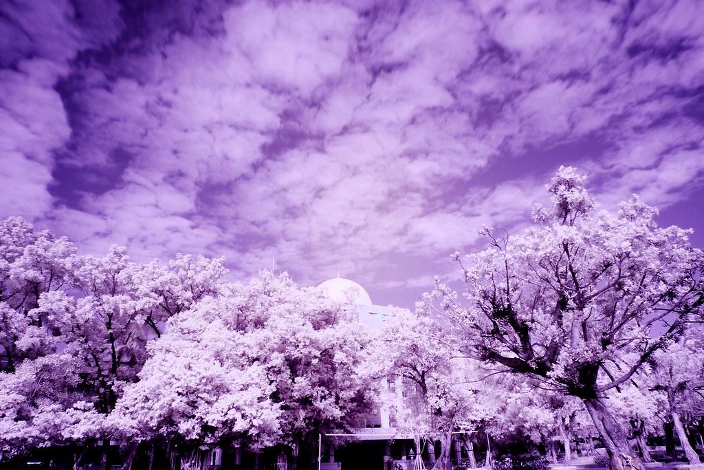 老機身也有春天●紅外線攝影初探