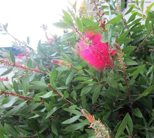 What kind of flower?  Monterrey Bay, CA
