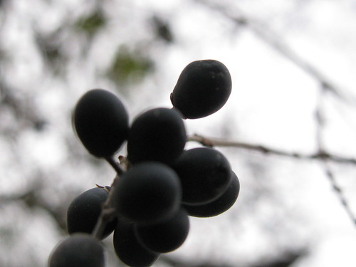 dark berries on grey