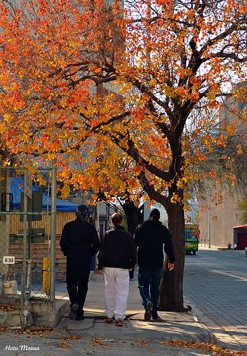 Regios haciendo otoño by Hotu Matua