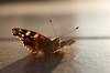 La Mariposa Amistosa