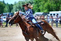 animal sports, rodeo, equestrianism, western riding, event, equestrian sport, sports, western pleasure, charreada, reining, horse,