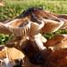 Mushroom Among Us