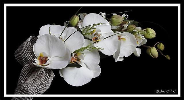 _MG_4758 _orquídeas
