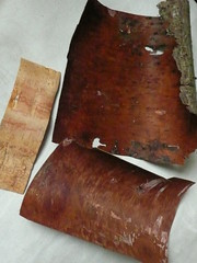purple birch bark colour