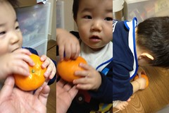みかんと遊ぶとらちゃん(2012/1/12)
