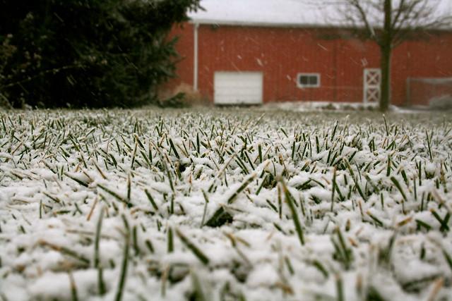 12:366 First Snow