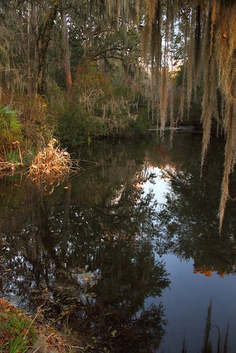 color reflection water southcarolina historic charleston reflect middletonplace brilliant middleton wetreflection mdggraphix lowcountrysunsets