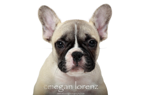 How Cute Am I?!! by Megan Lorenz